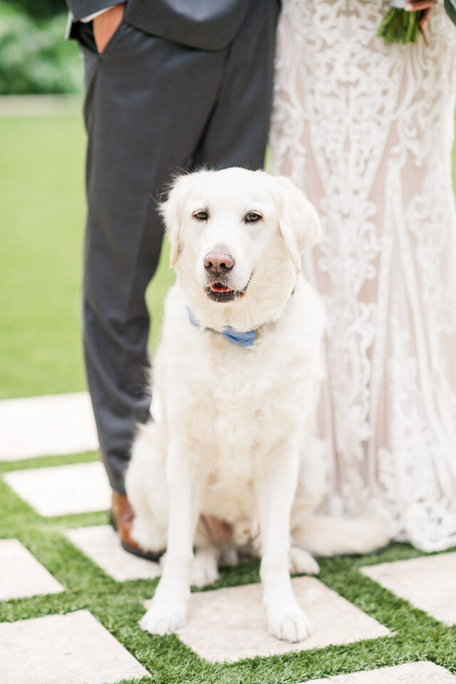 wedding dog with bowtie classic country club wedding